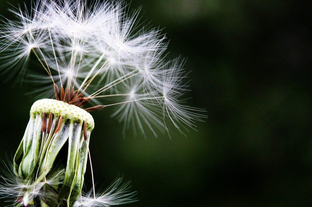 alergiczne-testy-skorne
