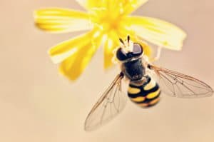 alergia-na-owady