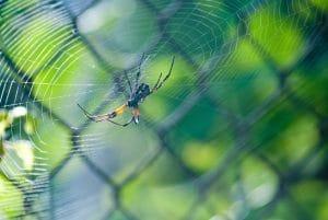 ugryzienie-przez-pajaka