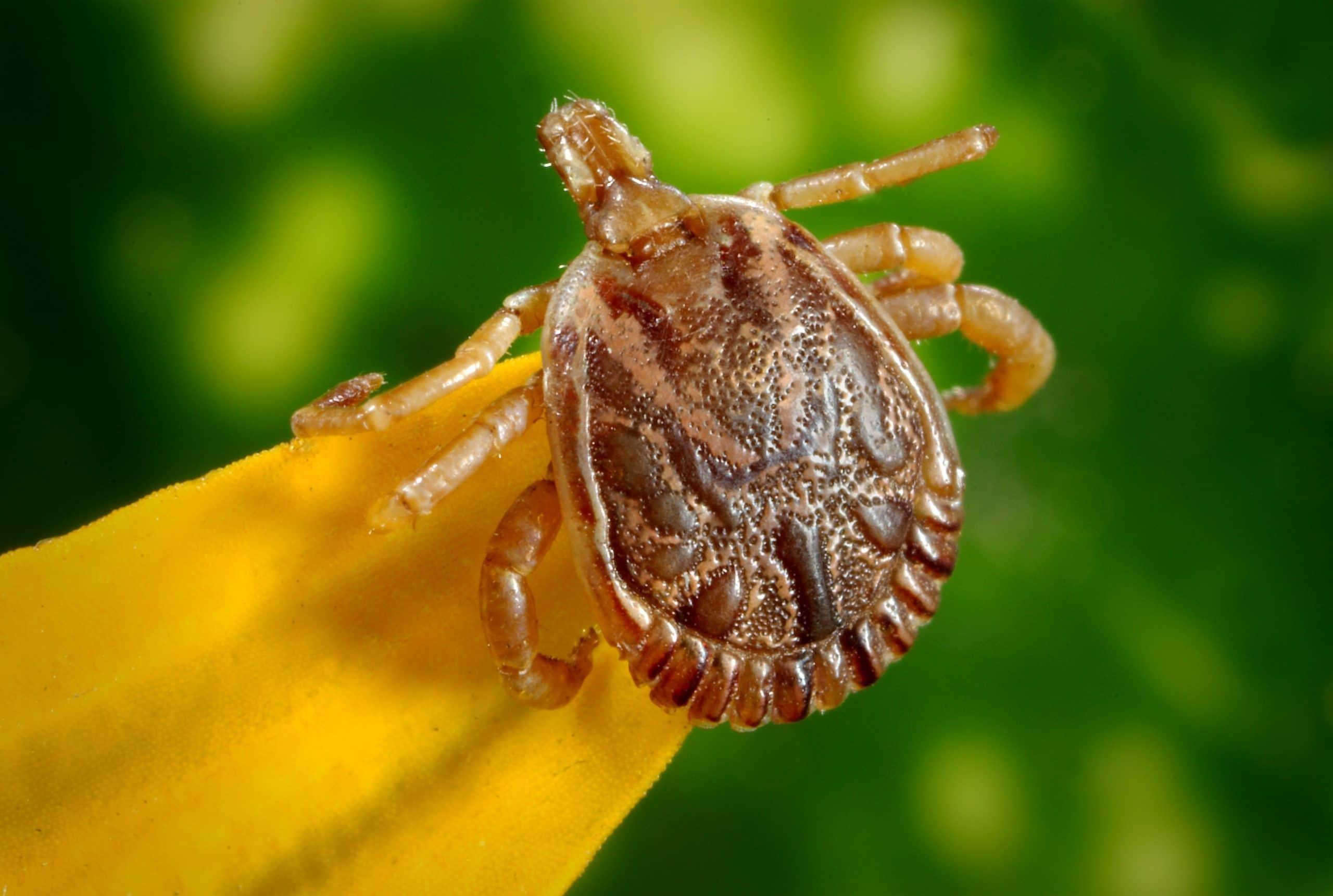 ukaszenia-i-uzadlenia-przez-owady
